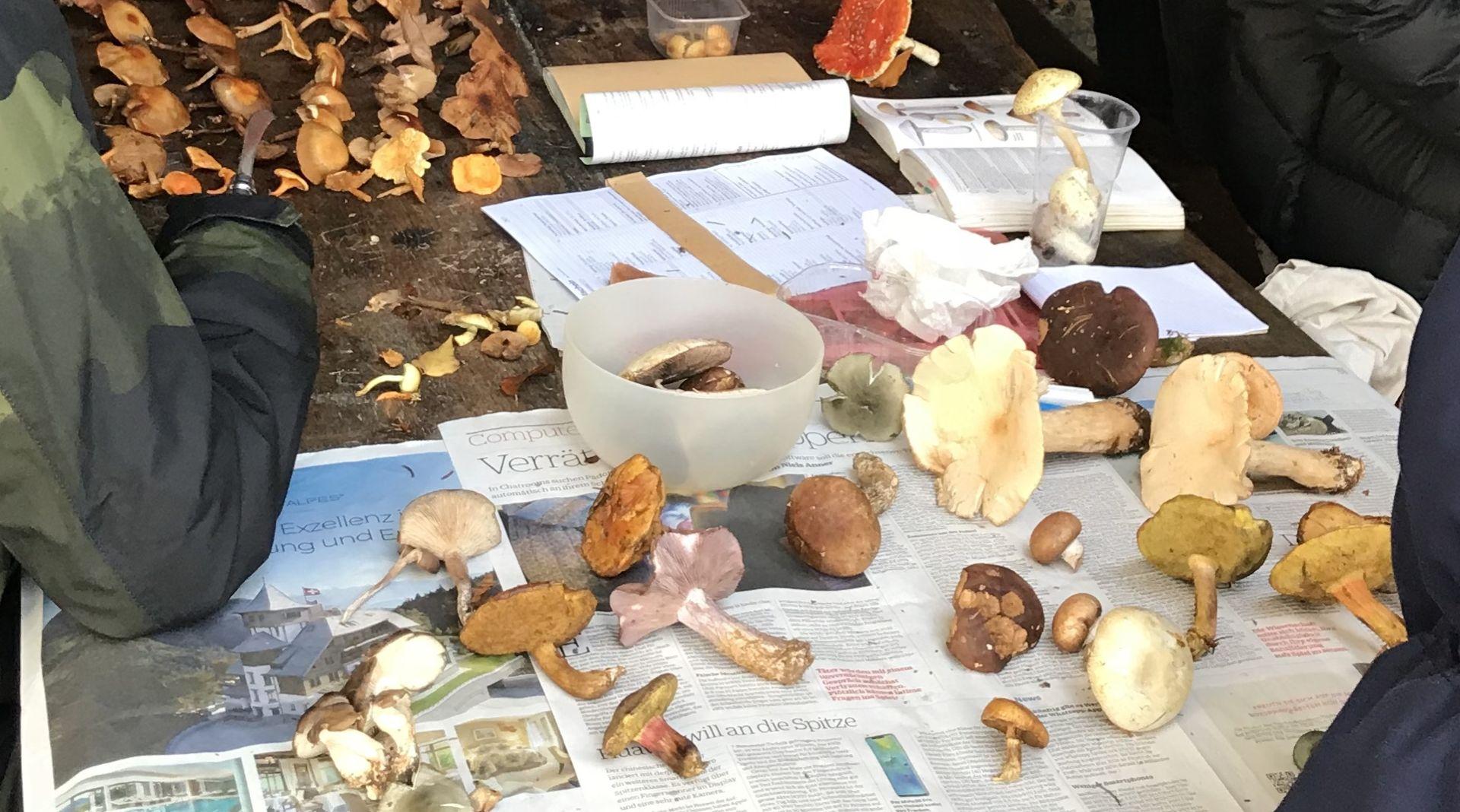Verschiedene Pilze sortiert
