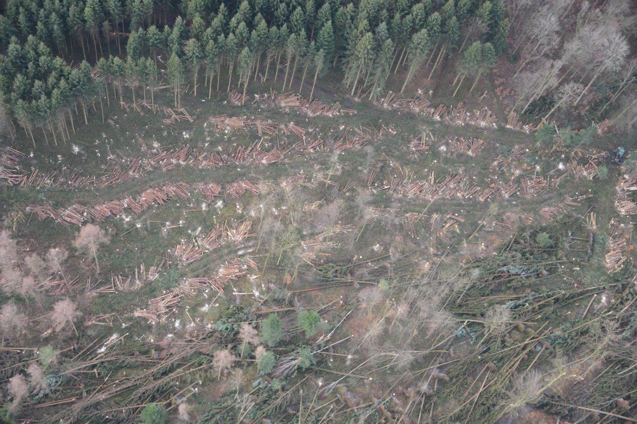 Luftaufnahme eines Waldgebietes. Durch das Gebiet führt eine Schneise von vom Sturm gefällten Bäumen.