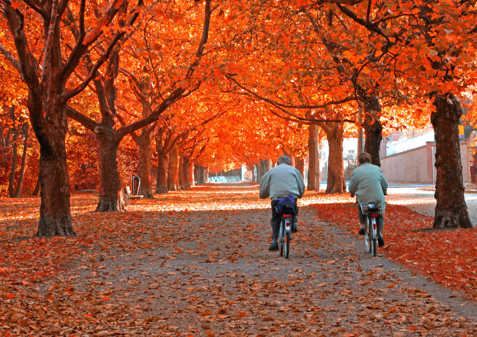 Seniorin und Senior auf Velo in Herbst-Allee